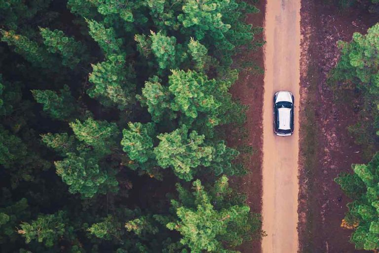 Car driving on dirt road in woods